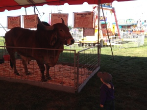 2014-09-fair-brazilliancow